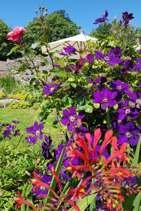 Back garden at Bridge House