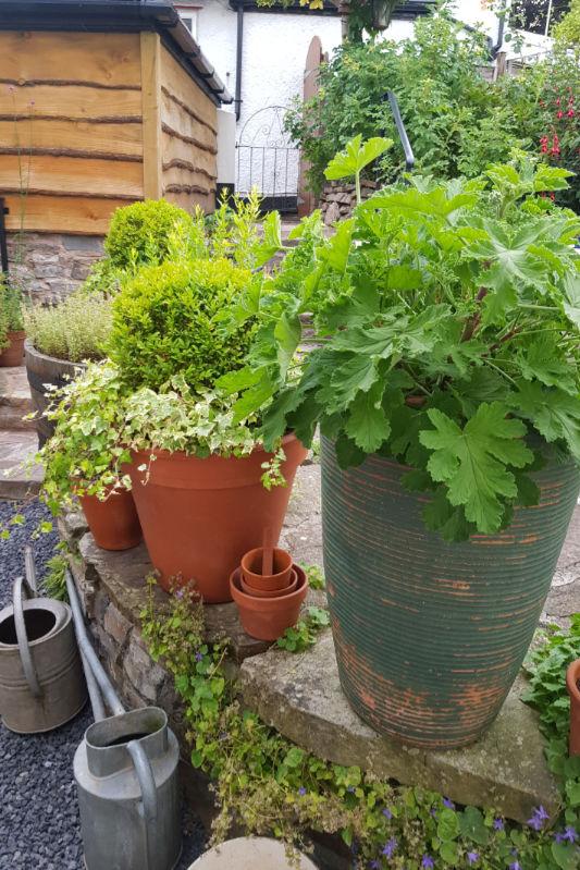Plant pots at Bridge House